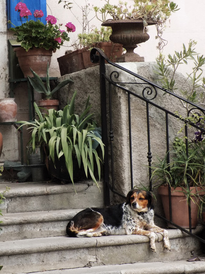 studio svart ateljé vit - Plants on the staircase with dog on the step