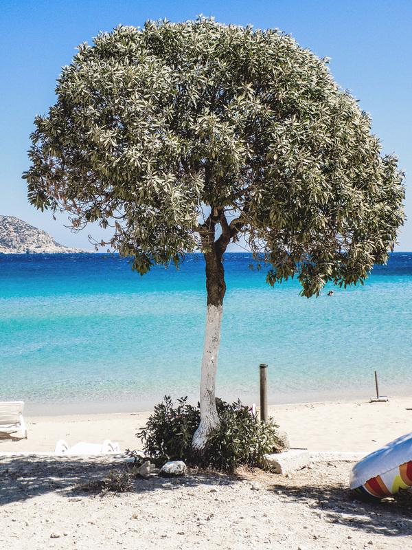 studio svart ateljé vit - Olivträd vid havet