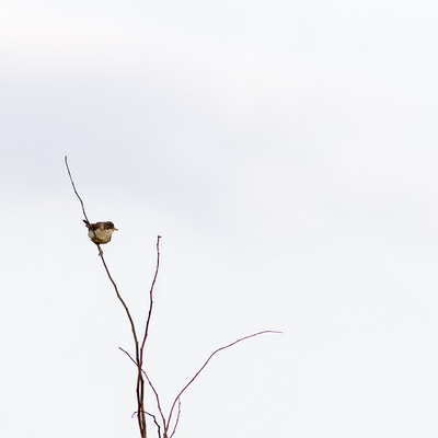 nicole thieffry photographie - minimalisme