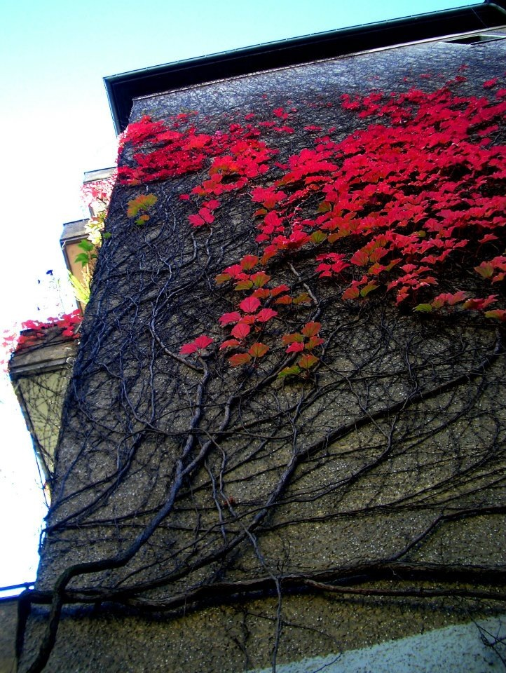 COLOUR-AND-SHAPE Photography - Berlin, Germany 2011