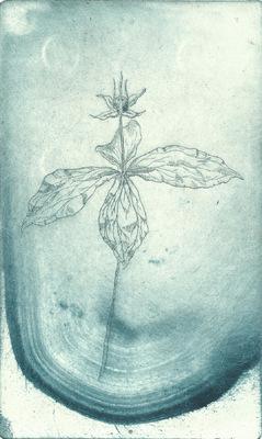 Seppo Alanissi - Sudenmarja / Paris quadrifolia etching, monoprint 20 * 12 cm