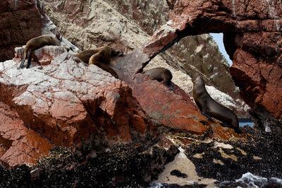Diegophoto - Islas Ballesta - Paracas