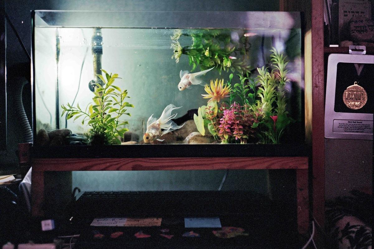 sebastiancunitz - Das Aquarium von Miri Aloni`s Wohnung beherbergt zwei weiße Fische.