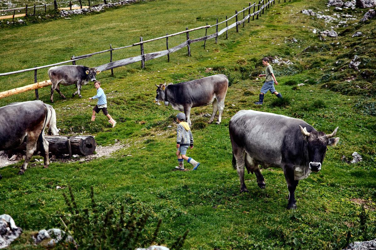 sebastiancunitz - Drei Jungs spielen zwischen den Kühen auf der Alm.
