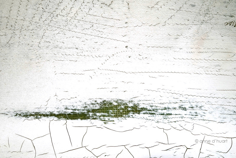Anne dHuart . Photographies - Alligator