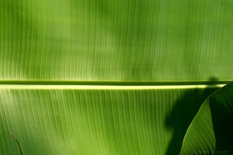 Anne dHuart . Photographies - Se mettre au vert