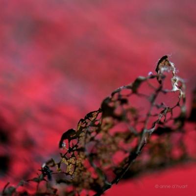 Anne dHuart . Photographies - Espace nature