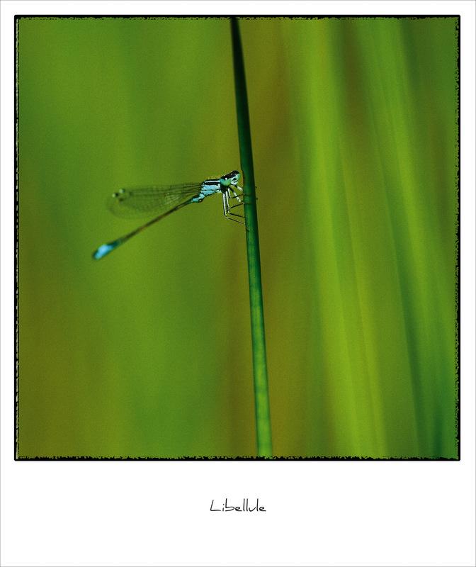 Fabien Delairon photographe - Demoiselle