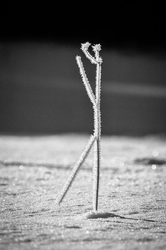 Fabien Delairon photographe - Garde à vous !