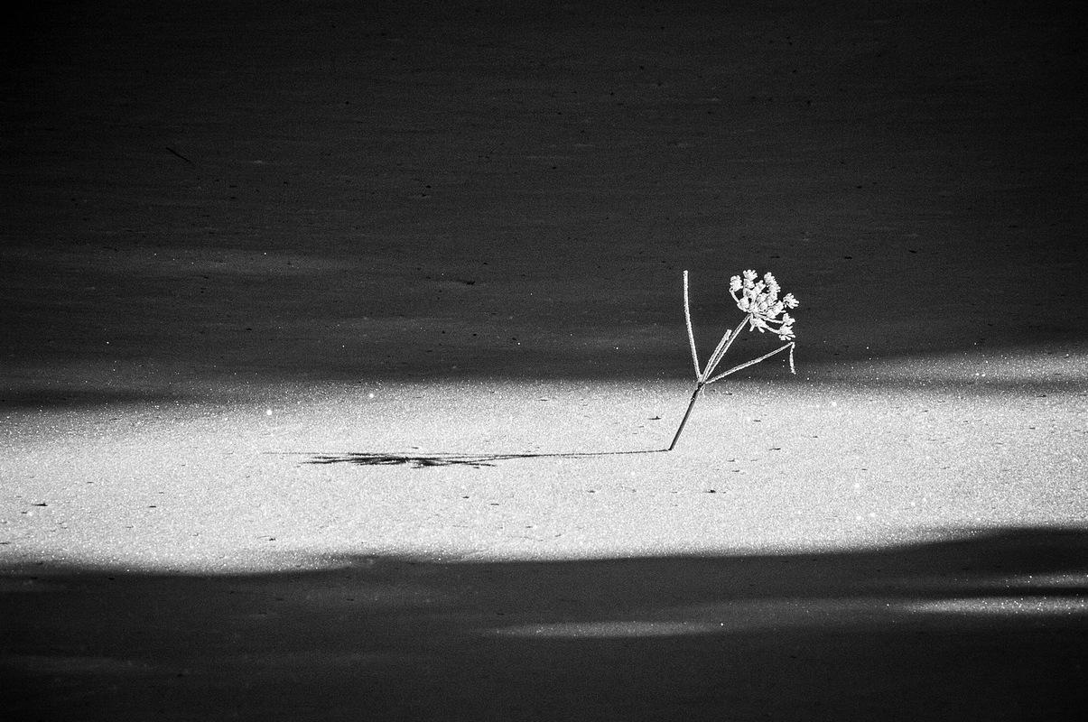 Fabien Delairon photographe - Etoile des Neiges