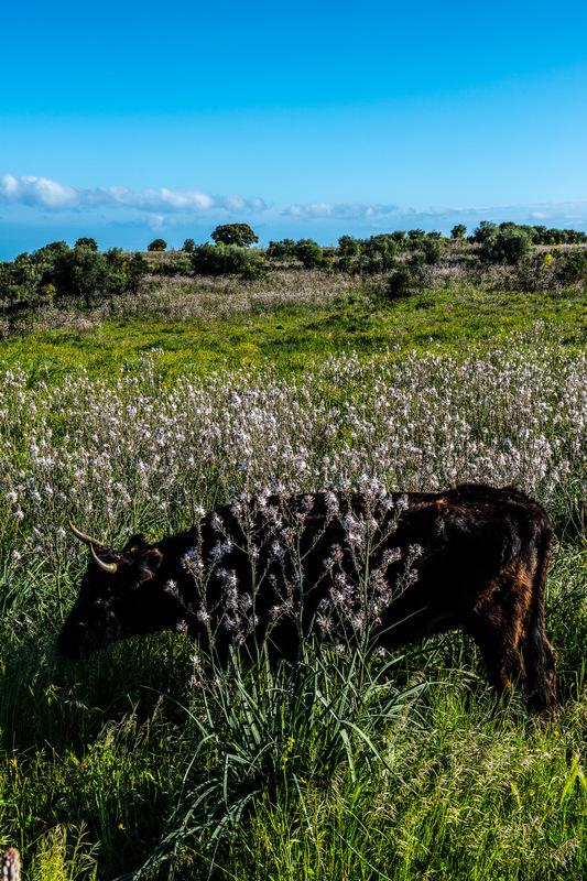 Fabien Delairon photographe - CORSE - Désert des Agriattes
