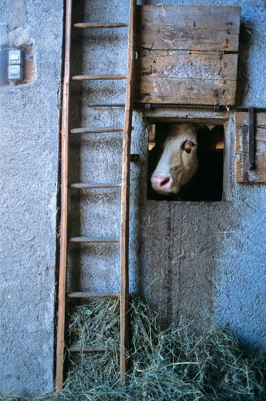 Fabien Delairon photographe - A la ferme