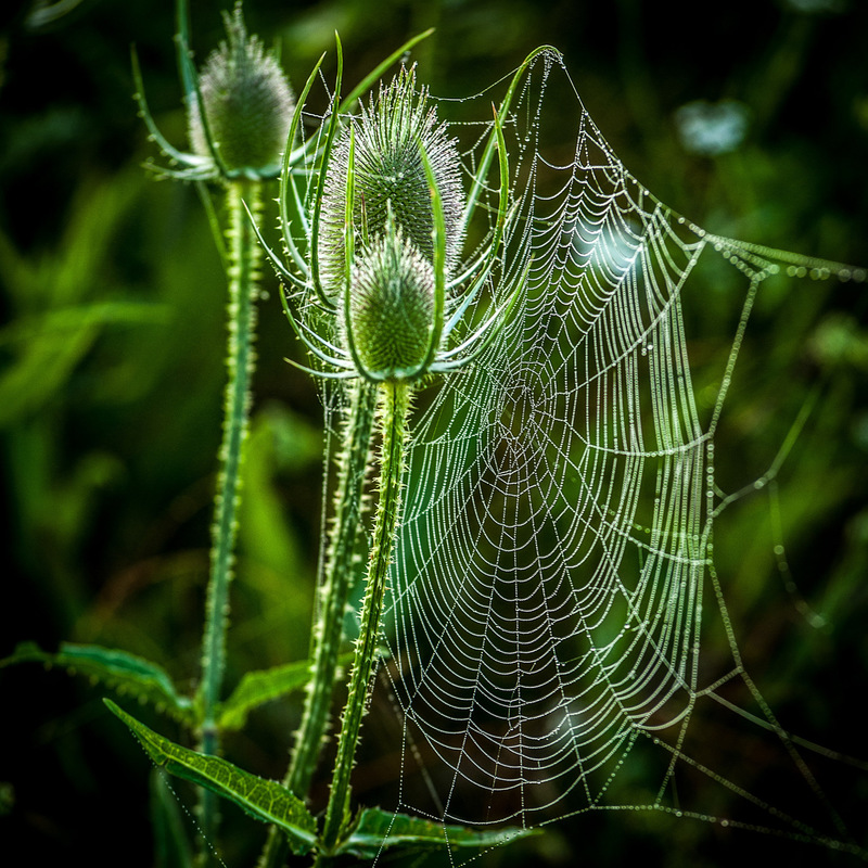 Fabien Delairon photographe -