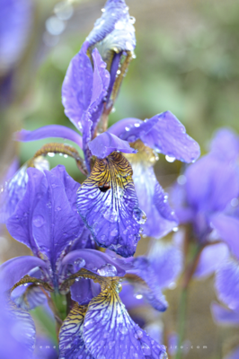 Flora Inspiro -