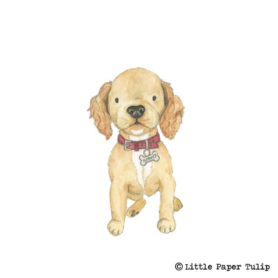 Little Paper Tulip - This mega cute mischievous puppy is called Harvey for Emily.
