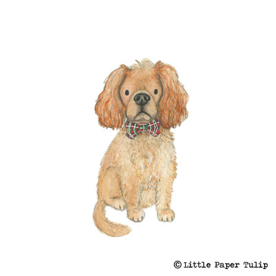 Little Paper Tulip - Kate wanted to surprise her Boyfriend with a portrait of their gorgeous dog Bertie.