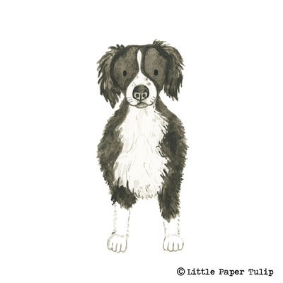 Little Paper Tulip - This is a portrait of the lovely Bute.