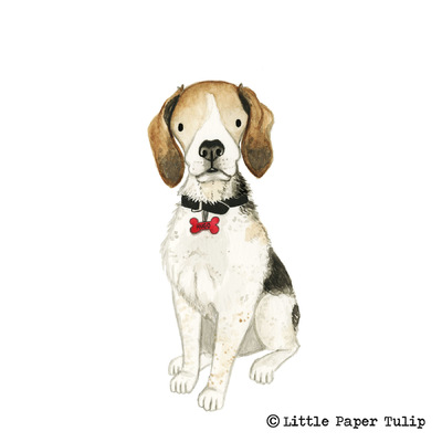Little Paper Tulip - This is the handsome Hugo painted for Elaine in Canada.