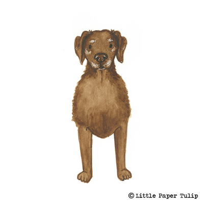 Little Paper Tulip - Here is a portrait of the adorable Bailey. Sadly Bailey passed away earlier this year, and Tracey wanted me to capture his lovable character. RIP Bailey.