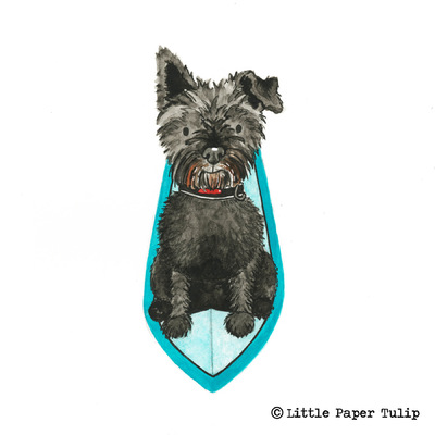 Little Paper Tulip - How pawsome is Archie paddle boarding in St Ives?