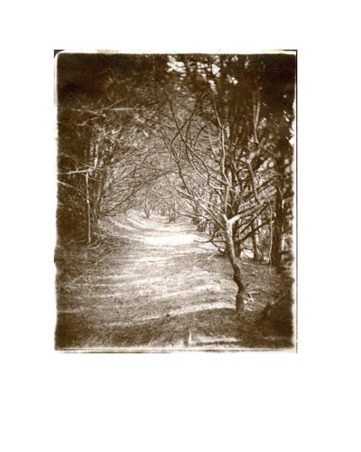 Paper , Shadows and Light. - The Maybury Yews.