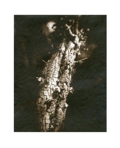Paper , Shadows and Light. - Woodland light.