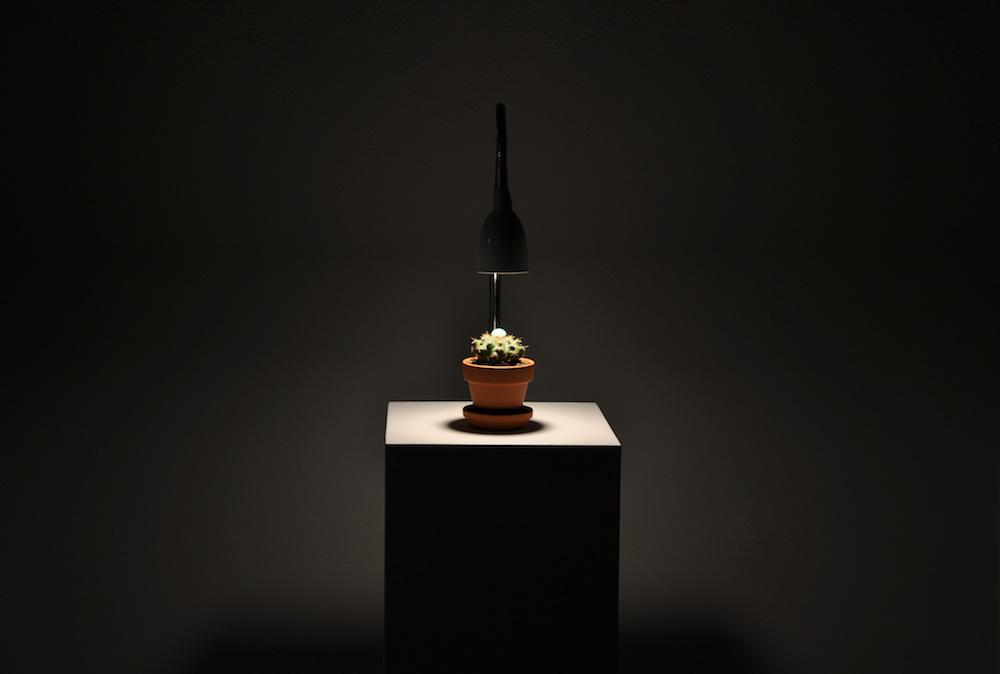 PLACENTIA ARTE - la madre di due figli è due madri installation - succulent plant +Ethiopian opal +LED lamp +wooden plinth cm. 120 x 21 x 21, 2016