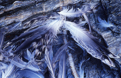 Art Photography - Feathers in Norway.