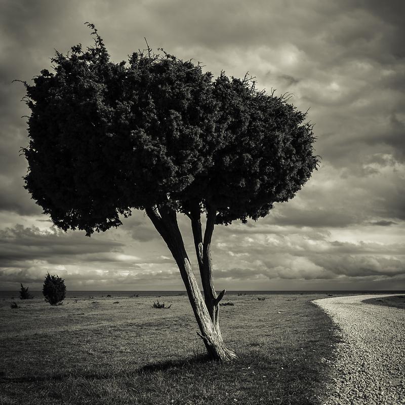 photosbyannika -