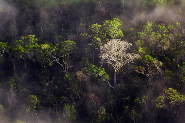 michal sikorski photography - Rainforest Isalo National Park, Madagascar.