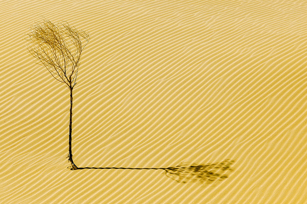 michal sikorski photography - Kubuqi Desert, Inner Mongolia, China.
