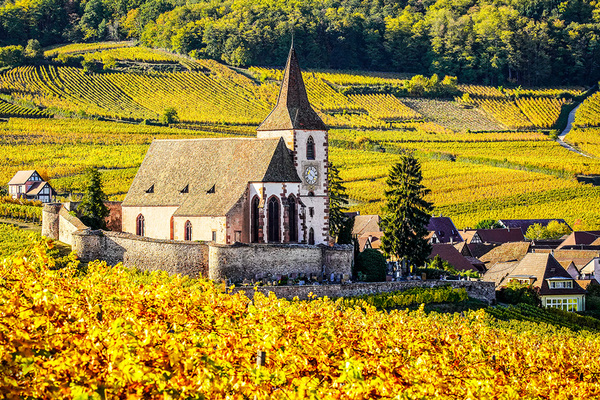 michal sikorski photography - Vineyards surrounding church in Hunawihr, Alsace, France.