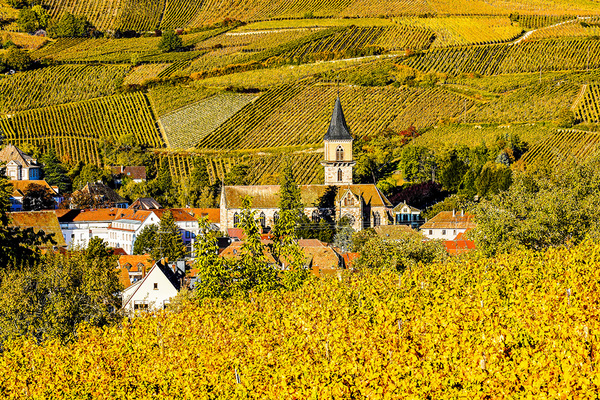 michal sikorski photography - Vineyards surrounding Ribeauville village in Alsace, France.