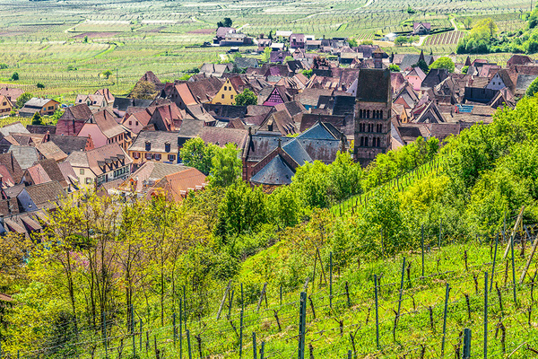 michal sikorski photography - Gueberschwihr village in Alsace, France.
