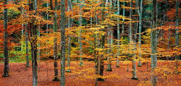 michal sikorski photography - Beech forest, Omberg, Östergötland, Sweden.