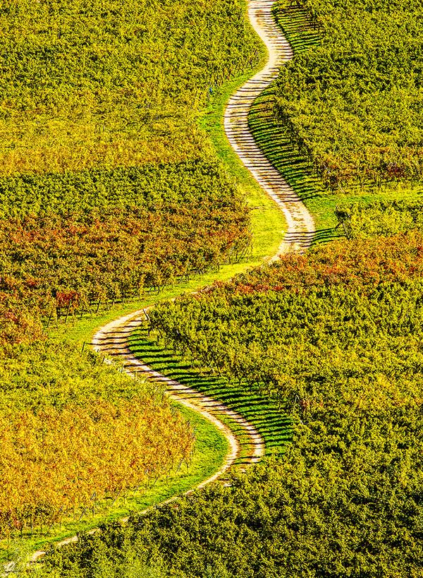 michal sikorski photography - Vinyards in Alsace, France.