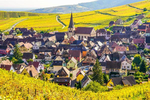 michal sikorski photography - Autumn colors surrounding Niedermorschwihr, Alsace, France.