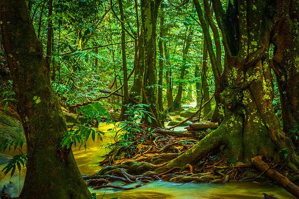 michal sikorski photography - Tropical Rainforest, peninsular Malaysia.
