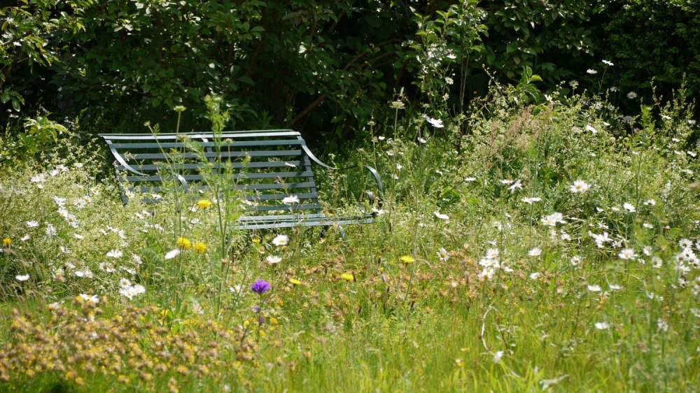 plants by design - Our meadow is an ever changing picture, a rich haven for wildlife and a reminder of the need to enhance biodiversity at every opportunity.
