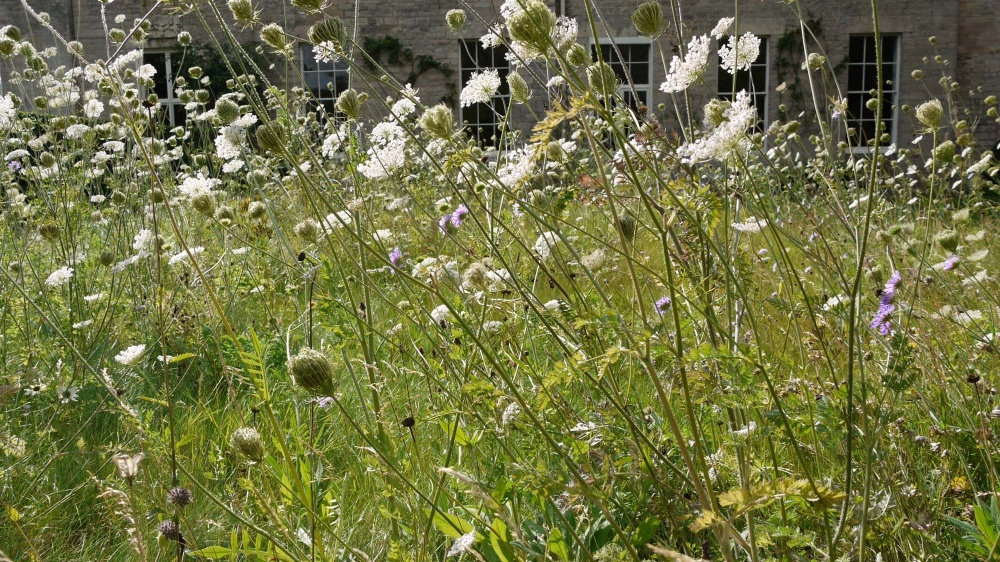 plants by design - We were fortunate that our lawn grasses are not too aggressive. We let them grow instead of cutting and planted wild flower plugs and a meadow seed mix to produce this result.