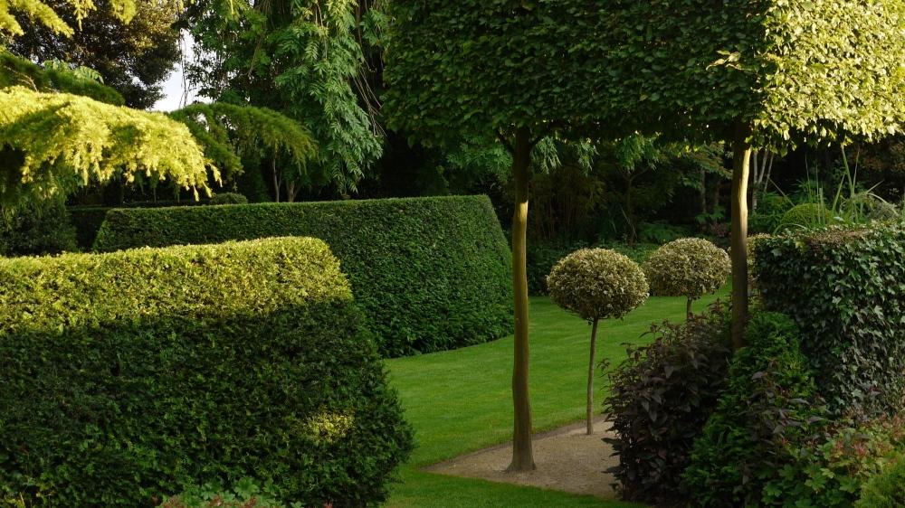 plants by design - Living sculpture defines spaces that contain more ephemeral plants providing seasonal interest