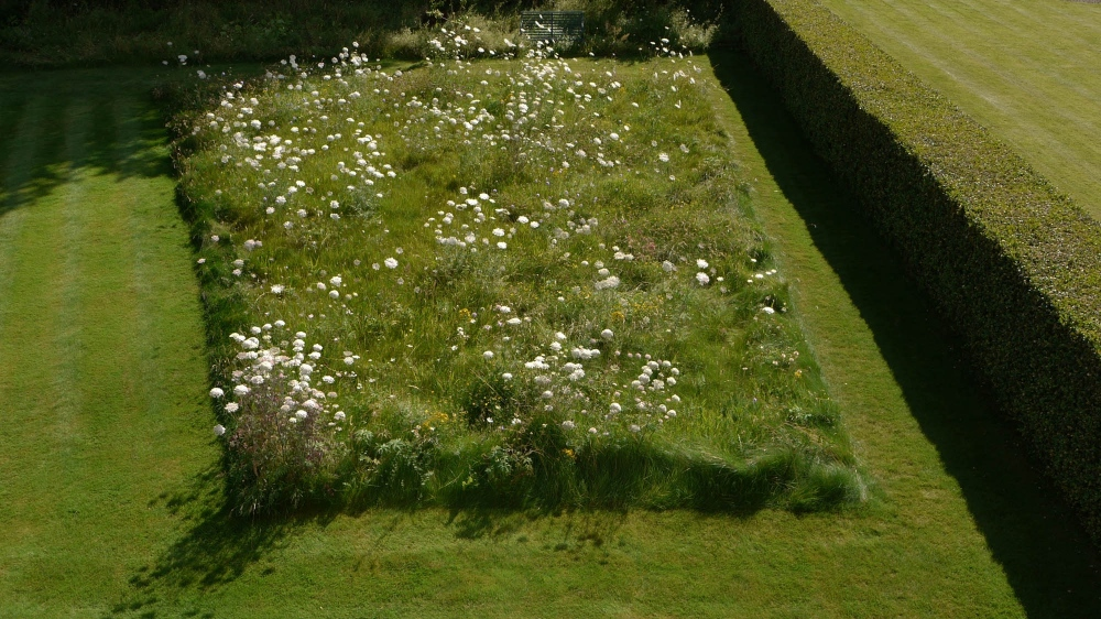 plants by design - The meadow is like a painting framed by mown grass paths.