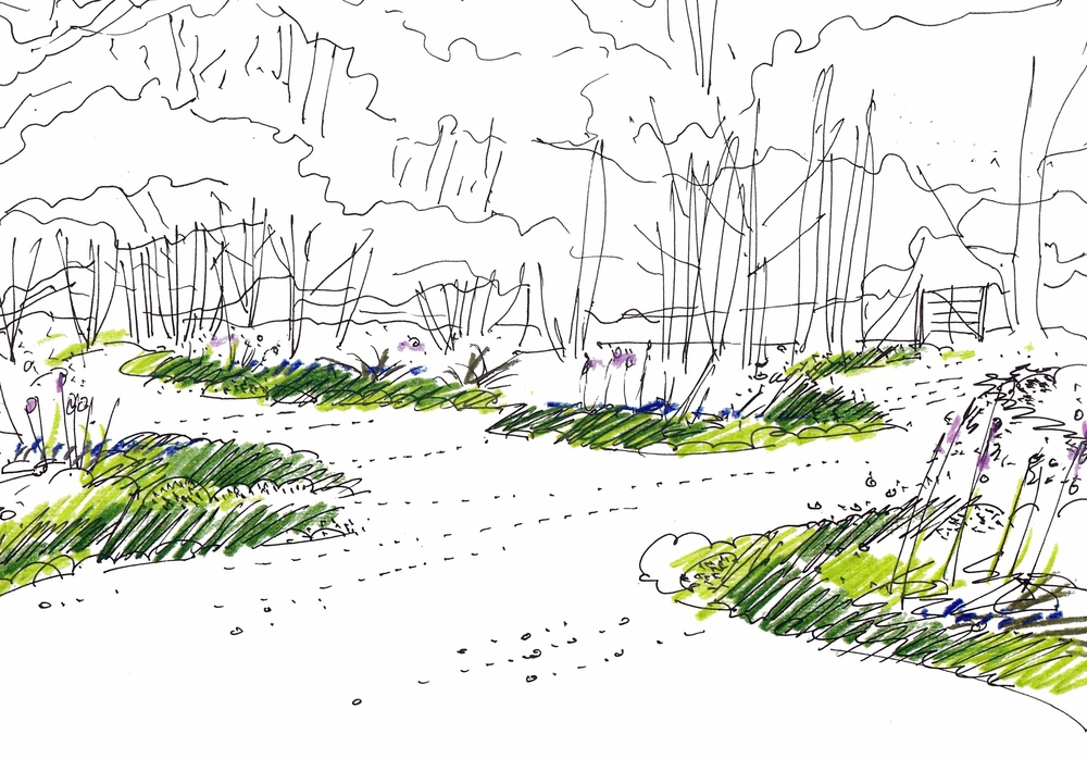plants by design - woodland garden design sketch
