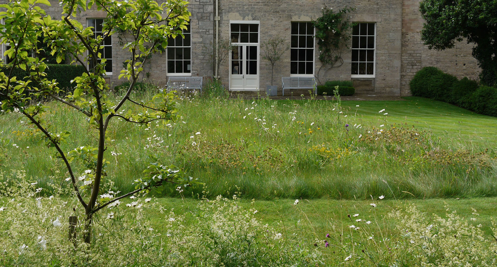 plants by design - We divided up the lawn with some parts more regularly cut and a meadow to provide seasonal interest.