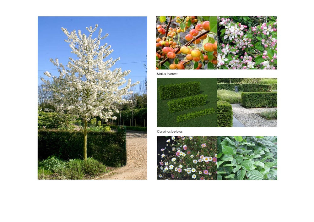 plants by design - Photo images of structure planting.