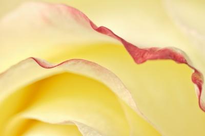 RedChilli Photography -