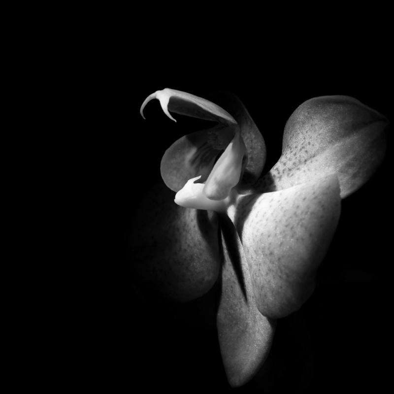 NaustvikPhotography.com - Flower snake