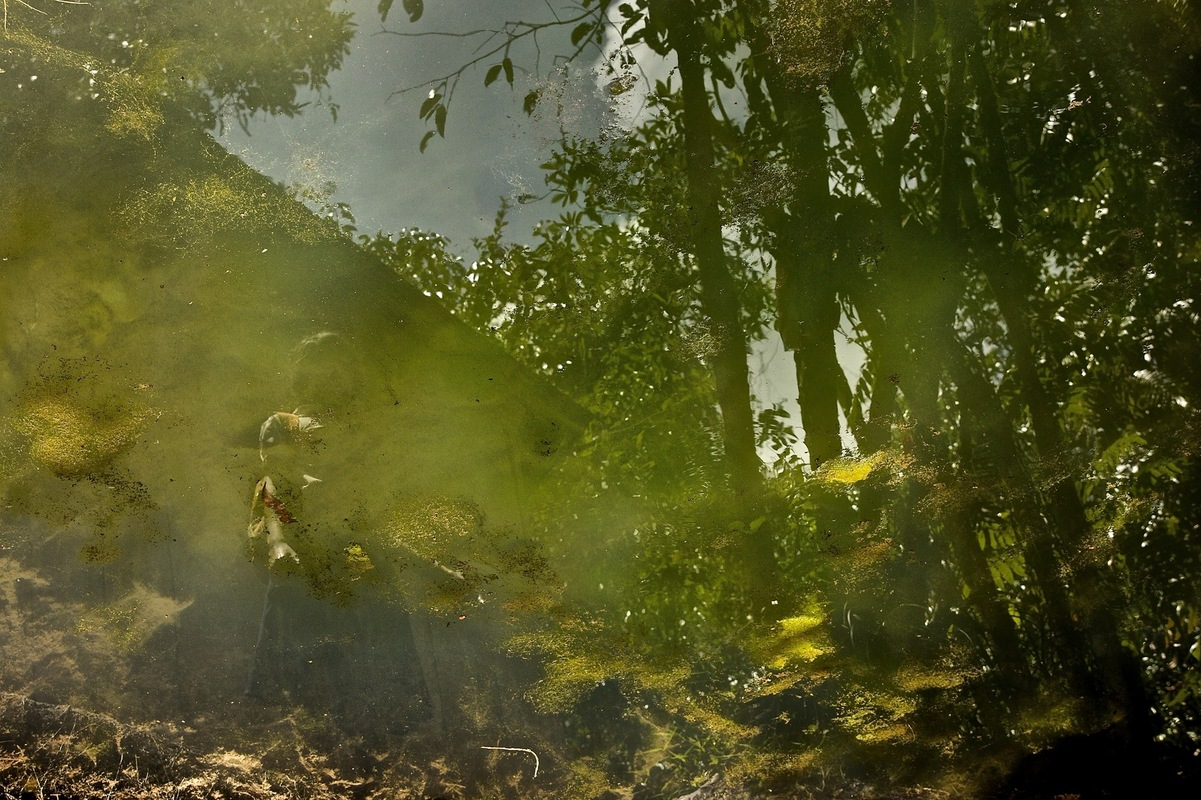 olivia pino photography - Angkor Thom, Cambodia