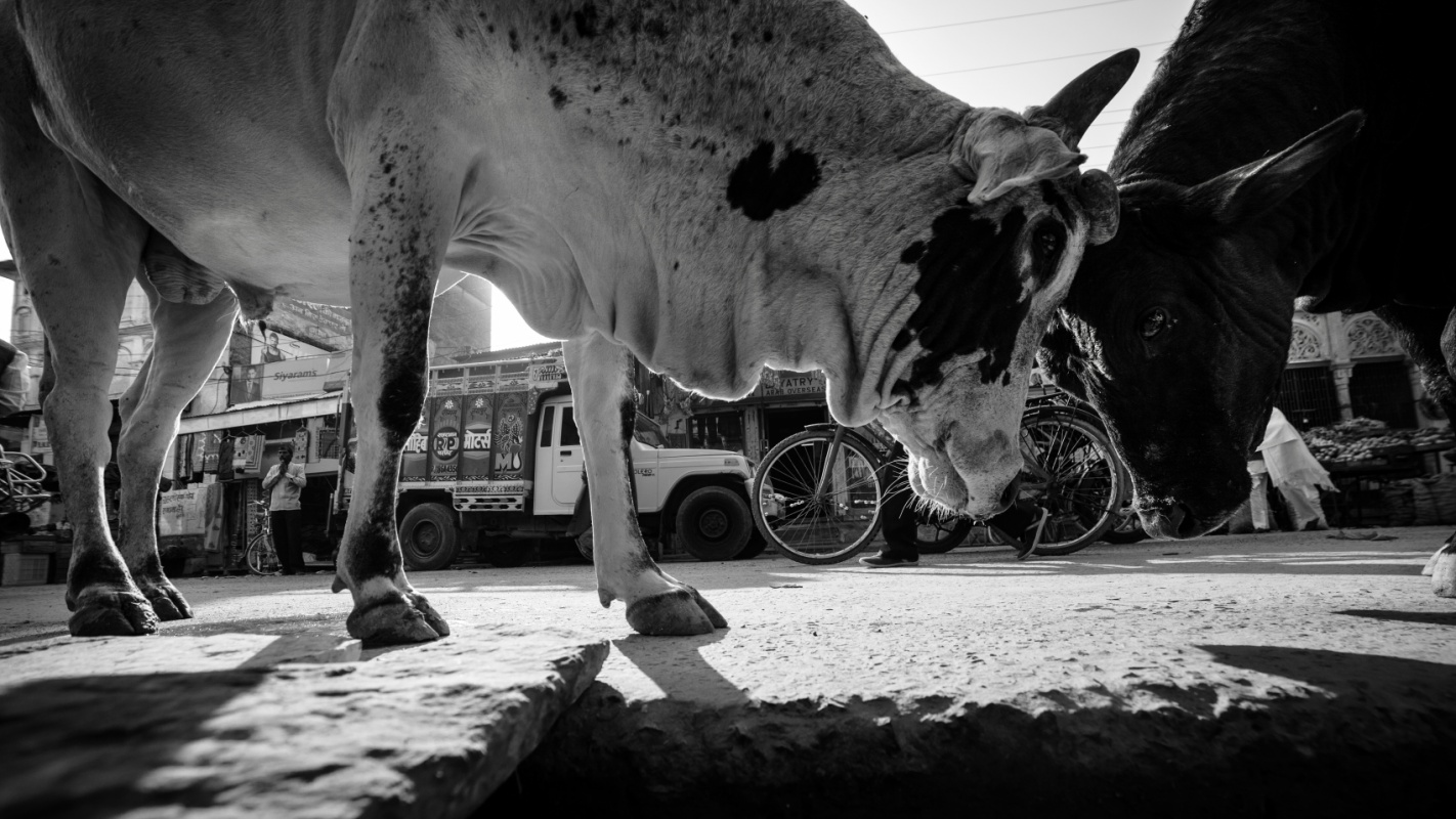 Tobbe Malm Photography - Mandawa India