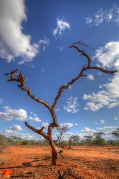 Megapixels Productions - Amboseli Red Soils. Amboseli, Kenya